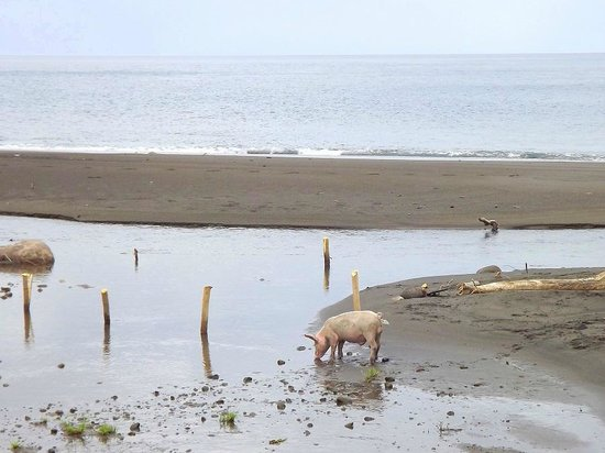 Richmond Vale Diving & Hiking Centre : The little pig on the beach