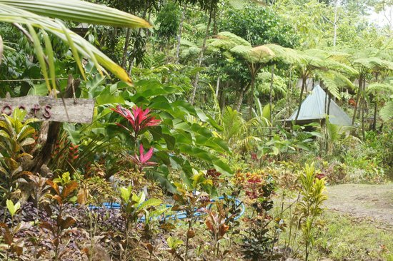 Roots Jungle Retreat : Vue d'ensemble