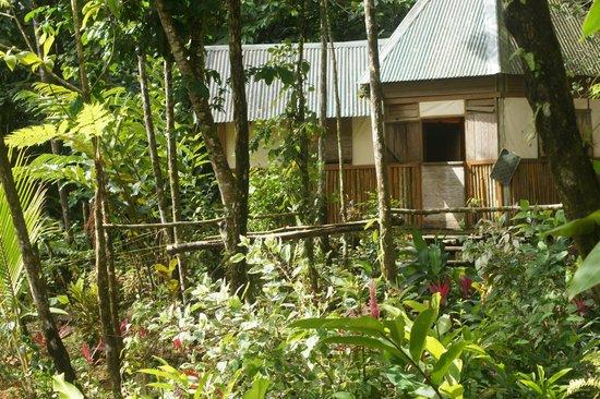 Roots Jungle Retreat : Une des petites maisons