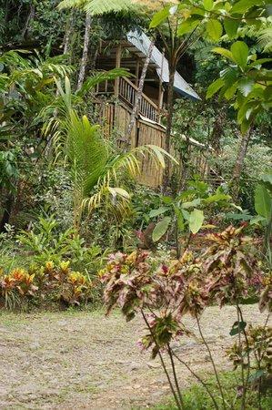 Roots Jungle Retreat : Espace repas