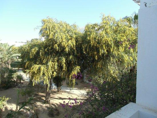 Club Med Djerba la Douce : les jardins