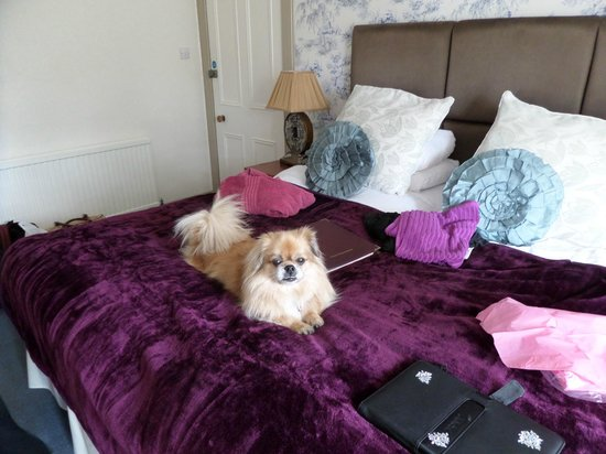 Rosemount Hotel : Buffy enjoyed and relaxed.