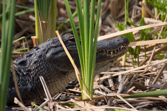 Everglades Holiday Park : Everglades
