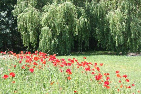 Au Chant des Sorgues: coquelicots au printemps dans notre jardin