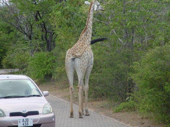 AVANI Victoria Falls Resort: Zambezi Sun Groundskeeper