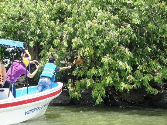Las Isletas: another boat feeding a monkey
