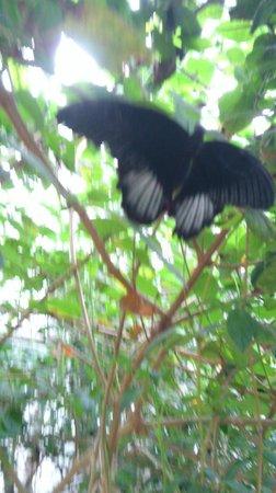 Pili Palas Nature World : Butterfly