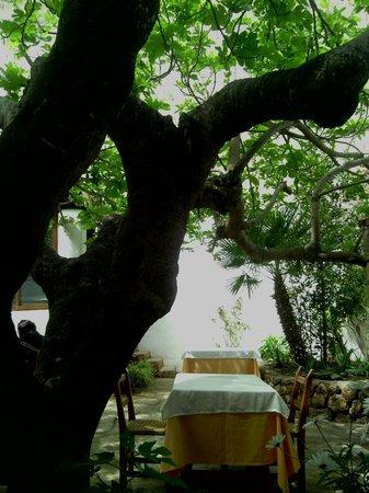 Es Ventall : Terraza y su higera