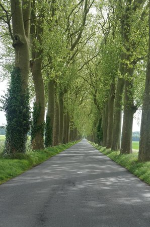 French Mystique Bike Tours: Love the tree lined roads