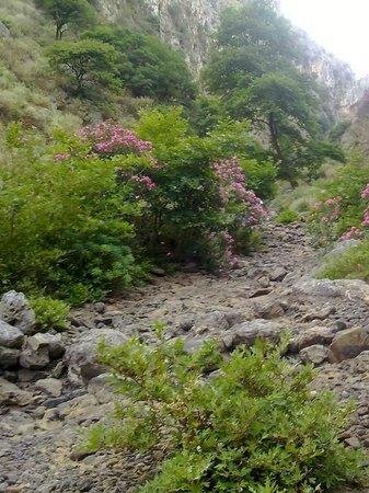 topolia - Picture of Topolia, Chania Prefecture - TripAdvisor