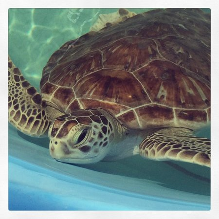 The Turtle Hospital: Turtle Hospital Marathon, Fl