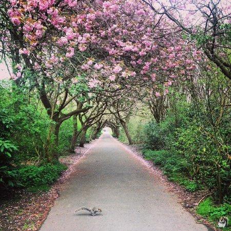 Heaton Park: Spring 2014