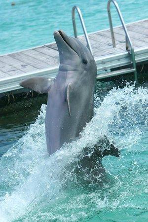 Dolphin Island : Dolphin Isla Park -  Piruetas