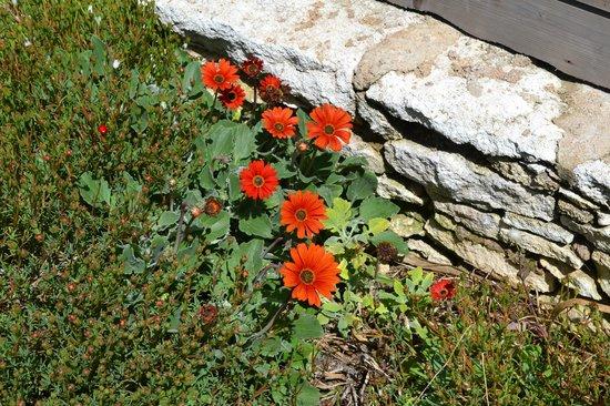 Pertamina Village - U Farniente: les fleurs