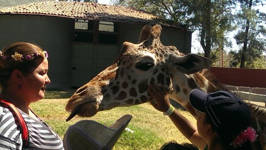 Zoologico Guadalajara: Zoo