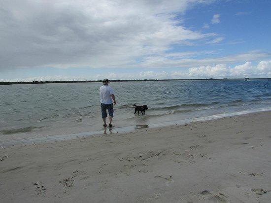 New Smyrna Beach Dog Park : Plage pour chien