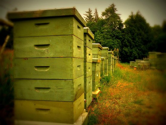 Tugwell Creek Honey Farm and Meadery: Tugwell Beehives