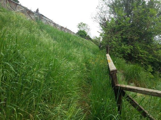 Via Julia Augusta: passaggio nell'erba alta