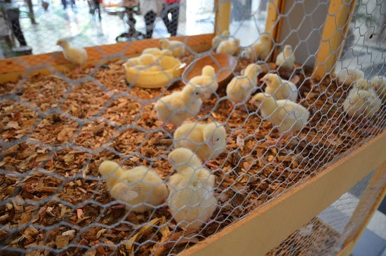 Sarova Whitesands Beach Resort & Spa: Easter chicks in the foyer.