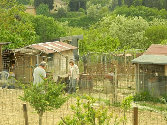 Le Tre Stelle: Enjoying the animals on the farm
