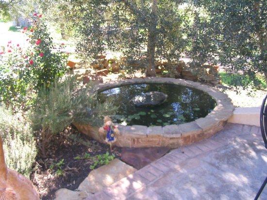 Sandy Oaks Olive Orchard: Sandy Oaks Grounds