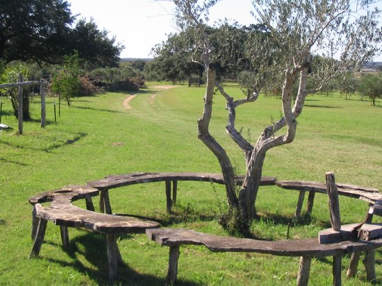 Sandy Oaks Olive Orchard: Surrounds