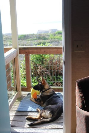 Fireside Motel : Dart watching from our deck