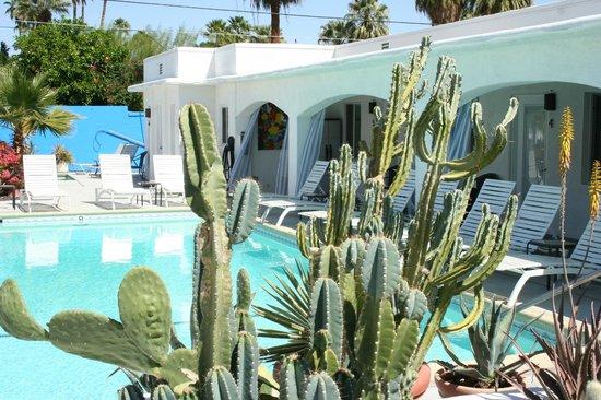 POSH Palm Springs Inn : Succulent Garden and Pool