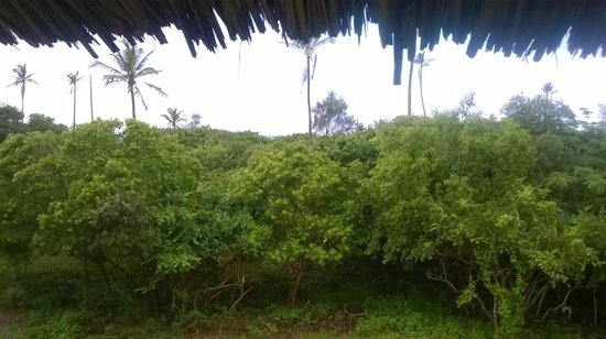 Kipepeo Beach Village: View from the balcony