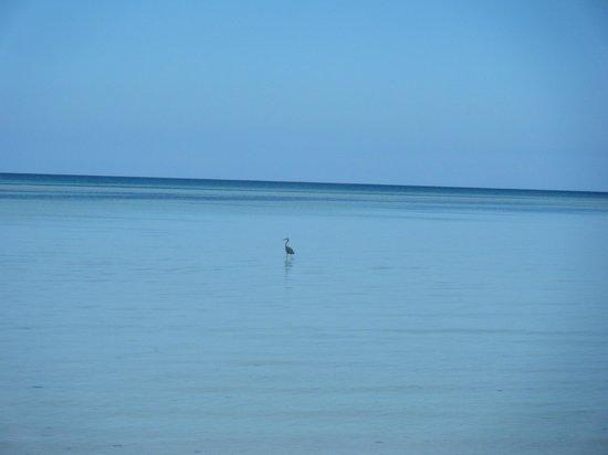 Memories Flamenco Beach Resort : Héron