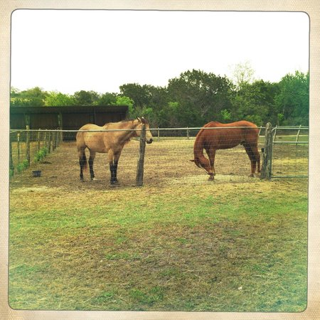 Hill Country Equestrian Lodge: ""