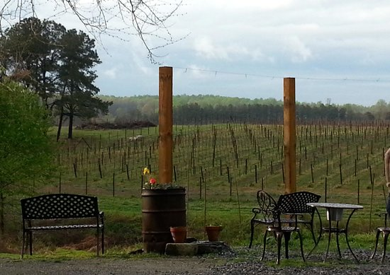 Spotsylvania, เวอร์จิเนีย: Beautiful view of the vineyard from the tasting room