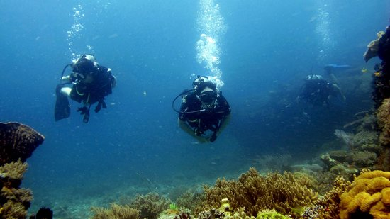 Anugerah Surf & Dive Resort: Diving trips