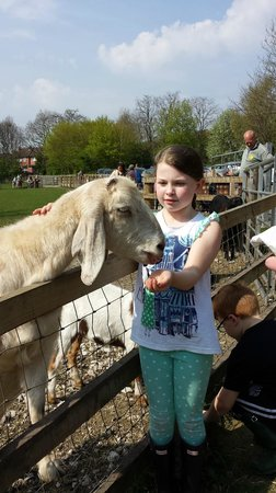 Meanwood Valley Urban Farm: Feeding the goats (MVUF)