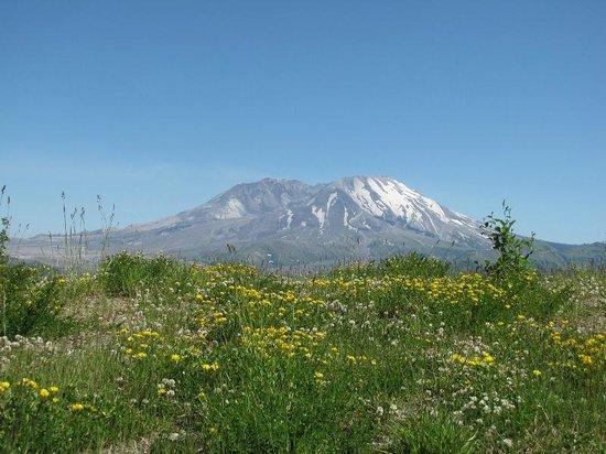 Mount St. Helens Visitor Center: Uma das paradas para vista do vulcão. Existem várias paradas com estacionamento.