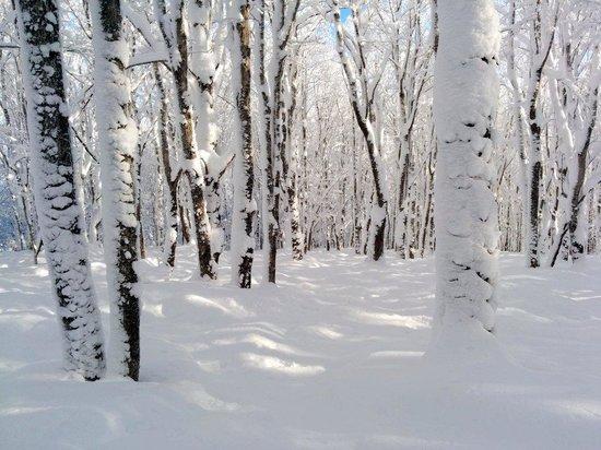 Espace Globetrotter Auberge Internationale : Du beau ski au Mont-Comi