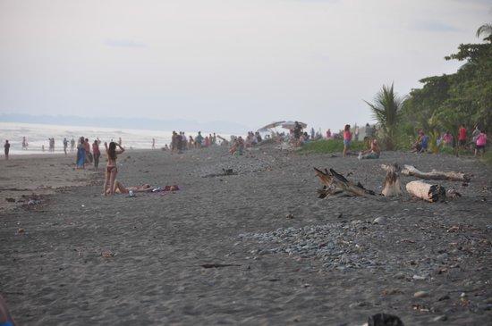 Hotel Domilocos: Beach before sunset