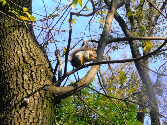 Parque Chapultepec: Esquilos a solta!
