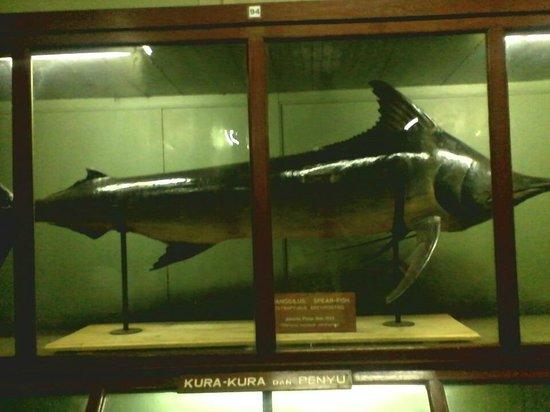 Bogor, Indonesië: Ikan Besaaar