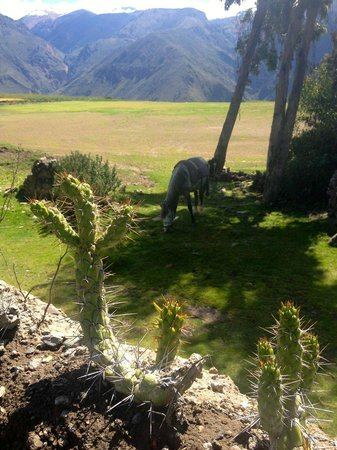 Colca Trek Lodge: View from Lodge front yard