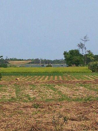 Moon's Homestay: Cam Nam farm fields