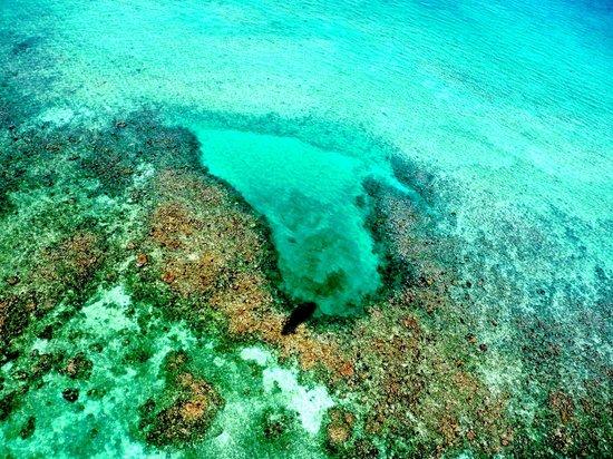 Almaplena Eco Resort & Beach Club : The Coral Reef in front at Almaplena Eco Beach Resort