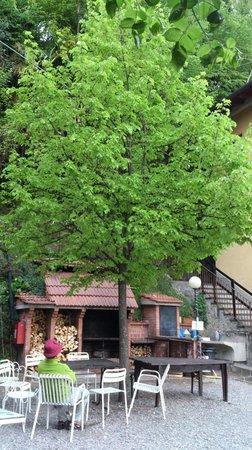 Menaggio Youth Hostel La Primula: Lovely tree