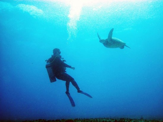 Reef Pirates Diving: Turtle and diver at Koko Crater