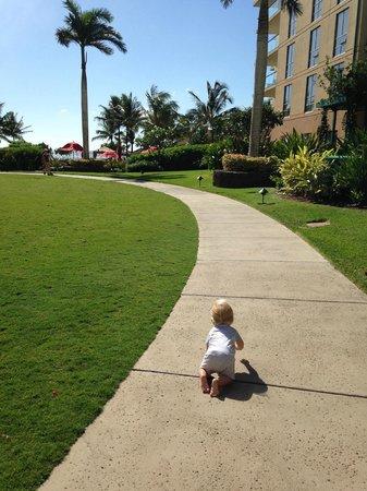 Honua Kai Resort & Spa : Looks of grass for kids to play/explore