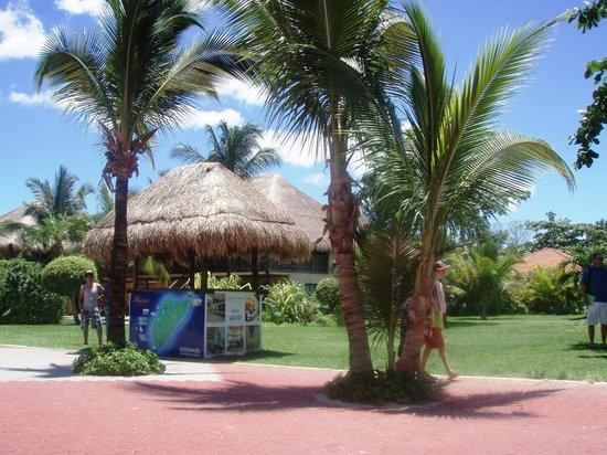 Allegro Cozumel : Area de jardines y alberca