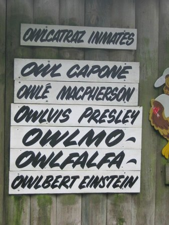 Owlcatraz: Names of the resident owls