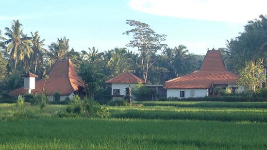 Umajati Retreat : view from rice paddies