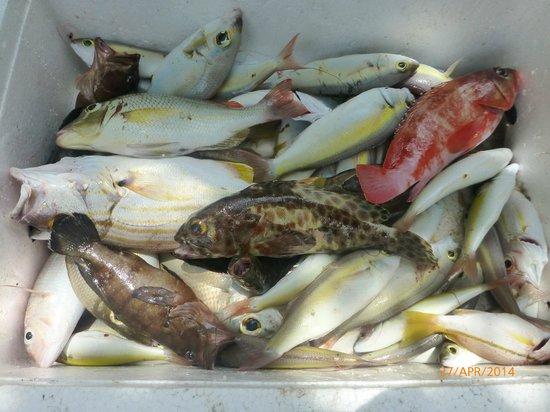 Bintan Spa Villa Beach Resort : Fishes we caught