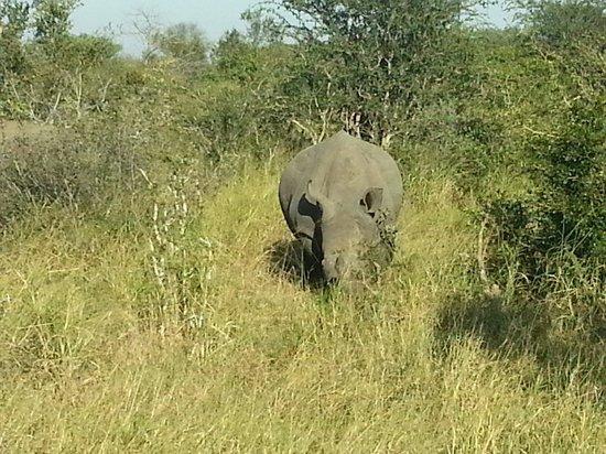 Kambaku Safari Lodge: Rhino